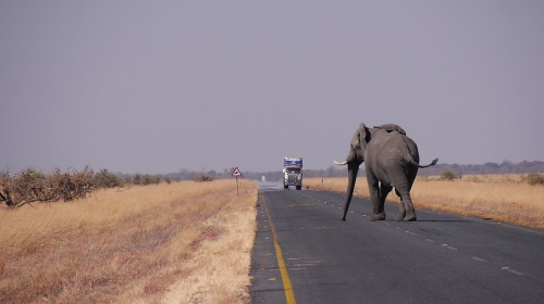 j2-servid-elefant.jpg